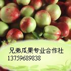 陕西油桃基地/大棚油桃价格/金太阳杏价格