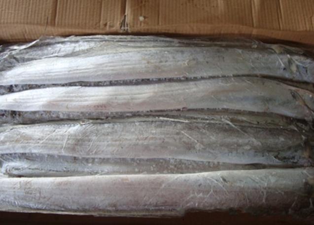 长期批发冷冻印度A带鱼 泰国带鱼 鳗鱼