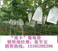 葡萄袋的生产厂家