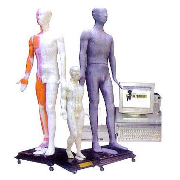 多媒体按摩点穴电子人体模型,模拟人