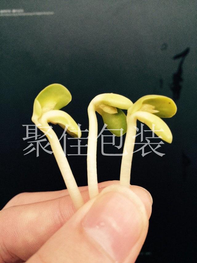 黄豆芽袋式气调保鲜包装机